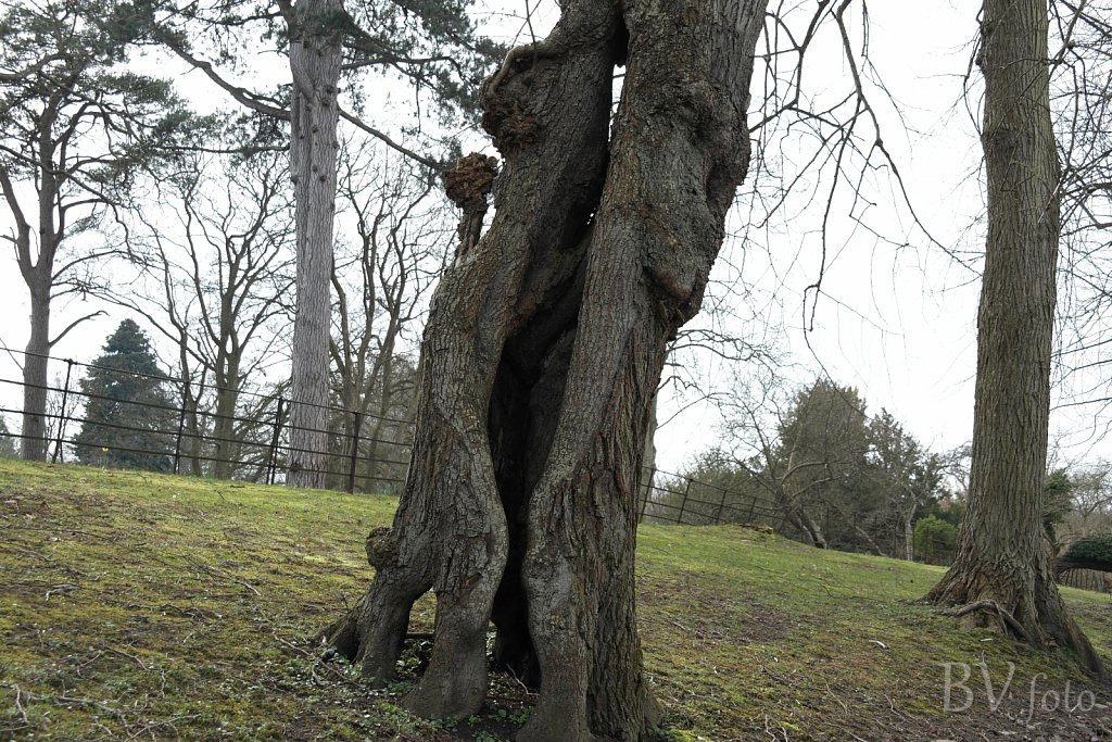 Hult træ