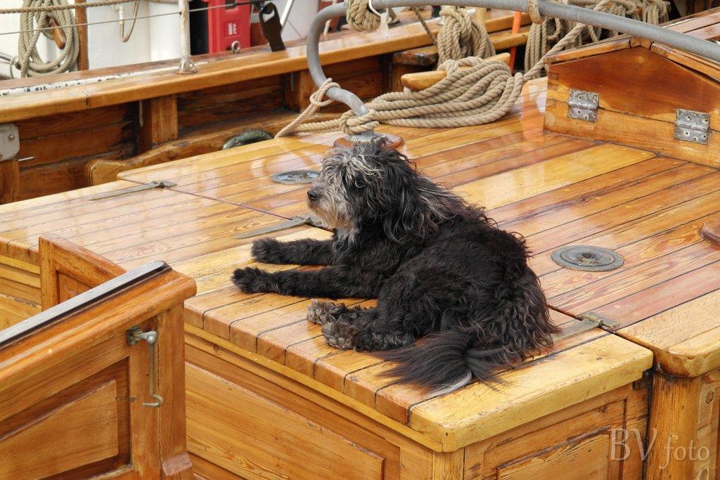 Skibshund, Carmelan