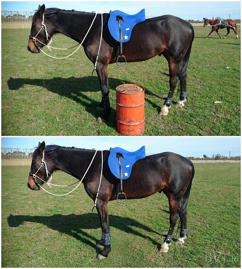 Hest uden Tønde