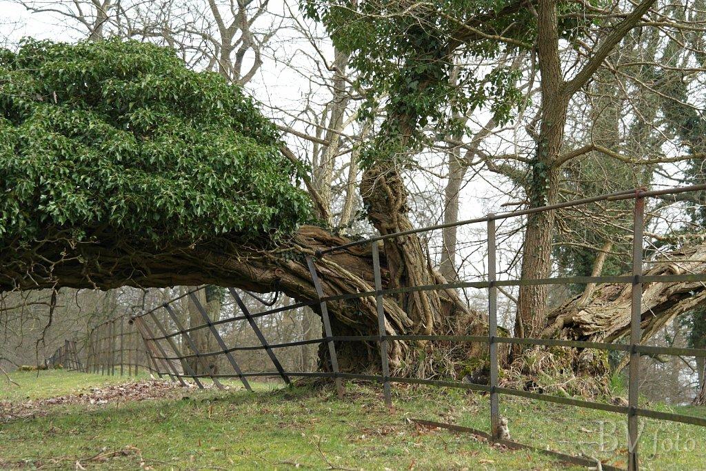 Væltet træ og bøjet hegn