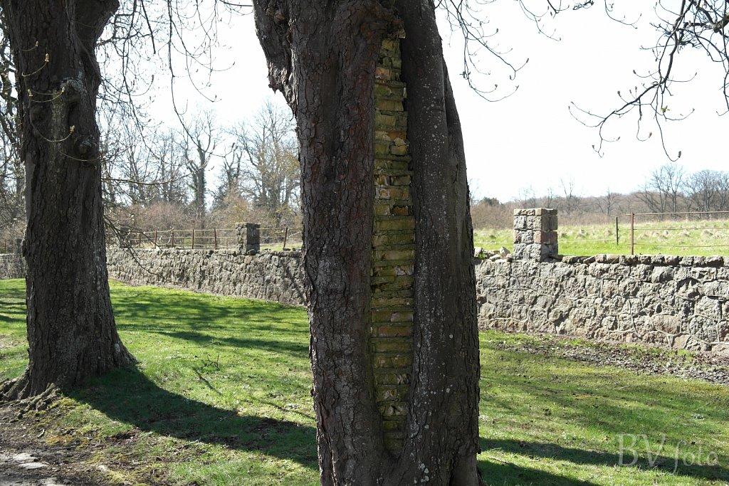 Muret Kastanjetræ