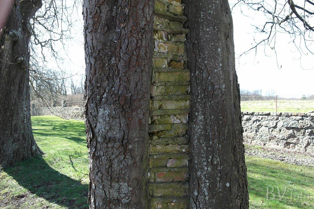 Murværk i Kastanjetræ